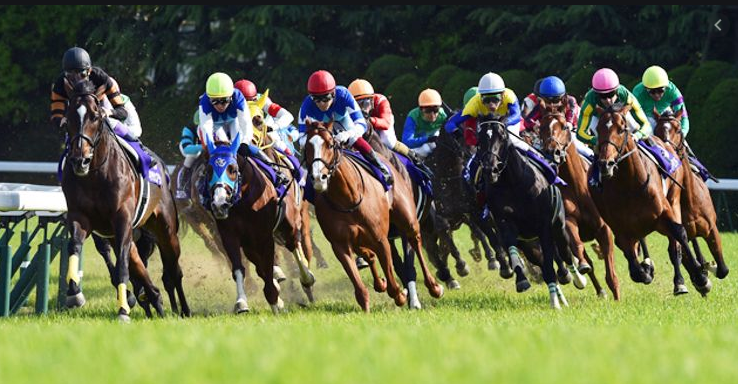 British Horse racing Authority Suspensions Announcements